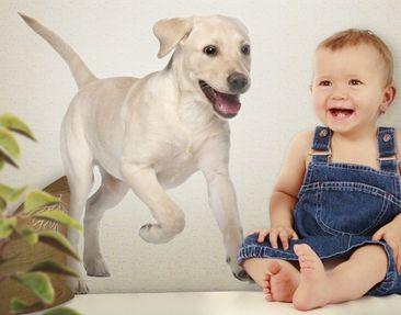 Produktfoto Wandtattoo Hund No.650 Labradorwelpe