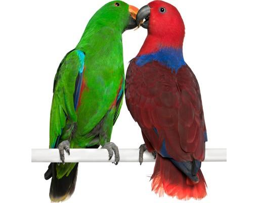 Produktfoto Wandtattoo Vögel No.645 Verliebte Papageien