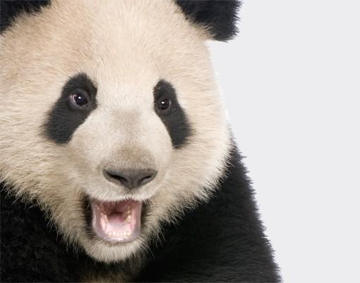 Produktfoto Wandtattoo No.501 Lachender Panda 100x87cm