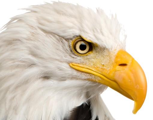 Produktfoto Fenstersticker No.379 Eye of the Eagle 30x58cm
