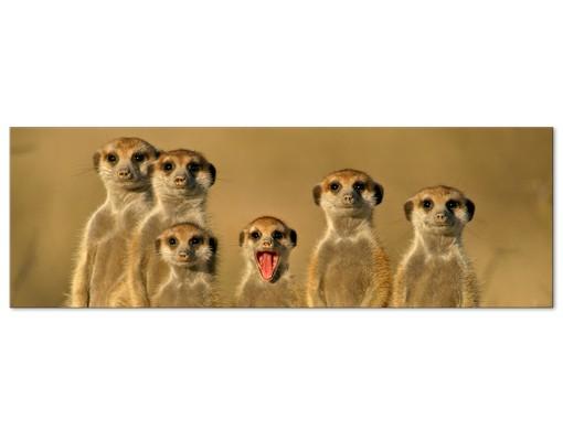Produktfoto Leinwandbild No.331 Meerkat Family 120x40cm