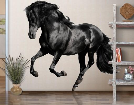 Produktfoto Wandtattoo Pferd No.649 Araberhengst