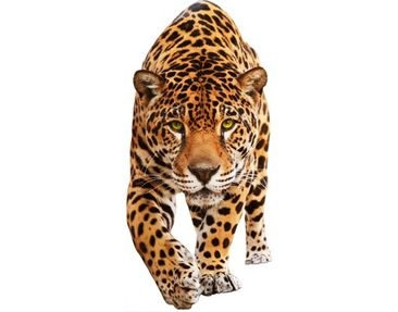 Product picture Wall Decal no.648 Creeping Jaguar