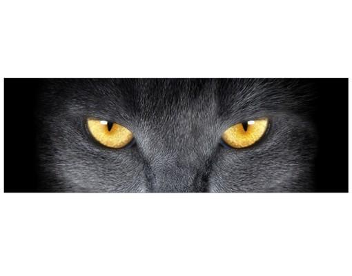 Produktfoto Leinwandbild No.592 Cats Gaze 120x40cm