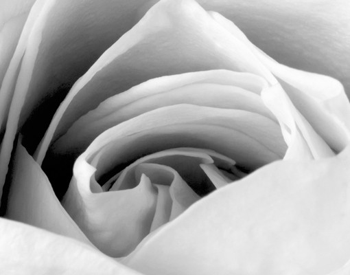 Produktfoto Leinwandbild No.594 Close Up Rose 120x40cm