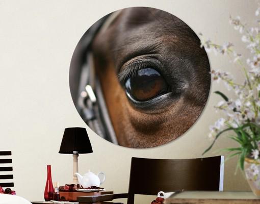 Produktfoto Leinwandbild Kreis Horse Eye