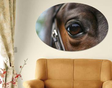 Produktfoto Leinwandbild Oval Horse Eye