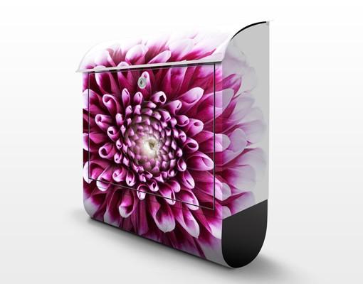 Produktfoto Briefkasten mit Zeitungsfach - Aster - Briefkasten Blumen