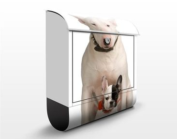 Immagine del prodotto Cassetta postale Bull Terrier And Friend 39x46x13cm