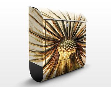 Produktfoto Briefkasten mit Zeitungsfach - Dandelion Close Up - Briefkasten Blumen