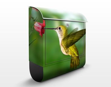 Produktfoto Design Letter Box Hummingbird And...