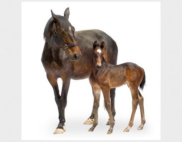 Product picture Design Table Trakehnermare & Foal...