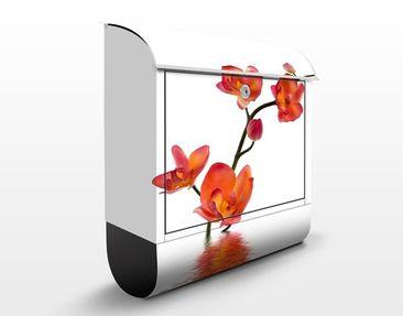Produktfoto Briefkasten mit Zeitungsfach - Flamy Orchid Waters - Briefkasten Blumen