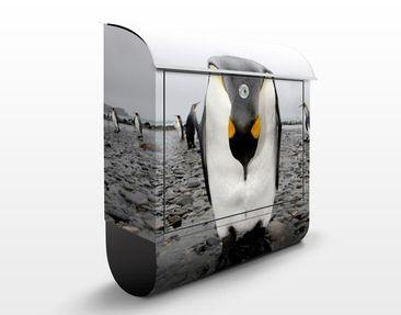 Produktfoto Briefkasten mit Zeitungsfach - Pinguin - Briefkasten mit Tiermotiv