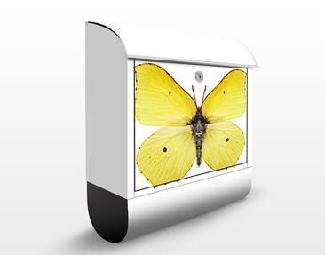 Produktfoto Design Letter Box Brimstone Butterfly...
