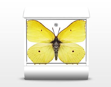 Product picture Design Letter Box Brimstone Butterfly...