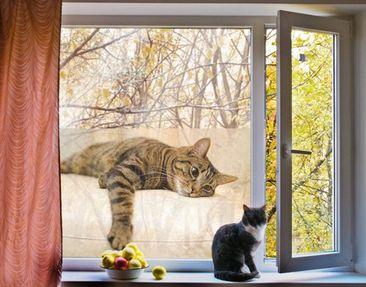 Produktfoto Fensterfolie - Sichtschutz Fenster Cat Chill Out - Fensterbilder