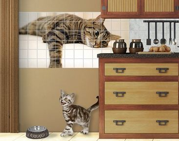 Produktfoto Tile Mural Cat Chill Out