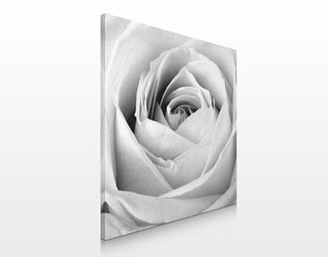 Produktfoto Leinwandbild No.320 Close Up Rose 70x70cm