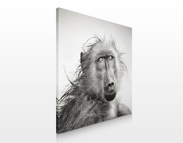 Product picture Canvas Art no.302 Crying Baboon 70x70cm