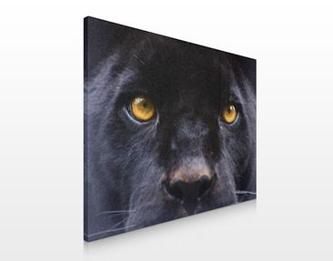Product picture Canvas Art no.103 Power Of Puma 80x60cm