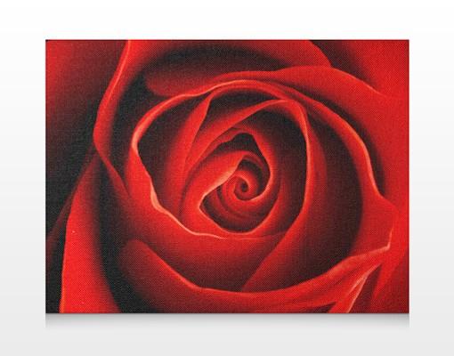 Produktfoto Leinwandbild No.155 Liebliche Rose 80x60cm