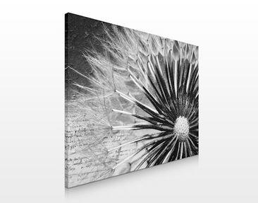 Produktfoto Leinwandbild No.272 Pusteblume Schwarz & Weiß 80x60cm