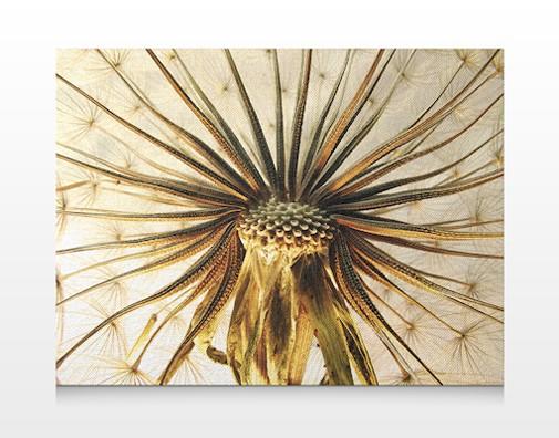 Produktfoto Leinwandbild No.304 Dandelion Close Up 80x60cm