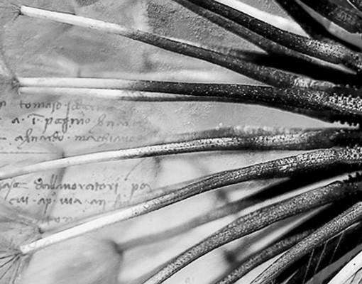 Produktfoto Waschbeckenunterschrank - Pusteblume Schwarz & Weiß - Blumen Badschrank Schwarz Grau