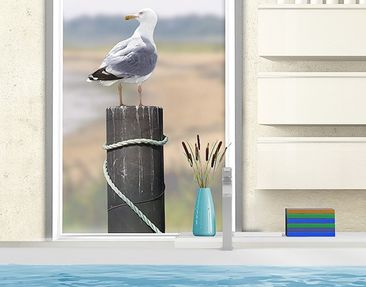 Product picture Window Sticker no.YK16 Curious Gull