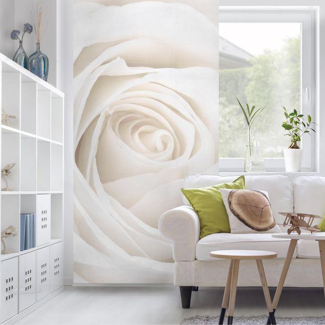 Produktfoto Rosenbild Raumteiler - Pretty White Rose - Blumen Raumtrenner - 250x120cm