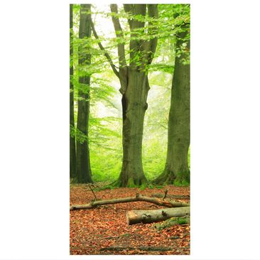 Product picture Panel Curtain Mighty Beech Trees...