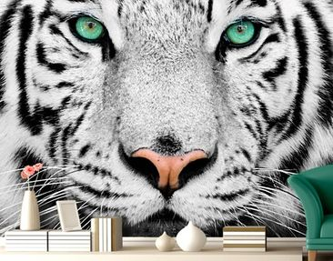 "Produktfoto Photo Wall Mural no.220 ""WHITE TIGER""..."