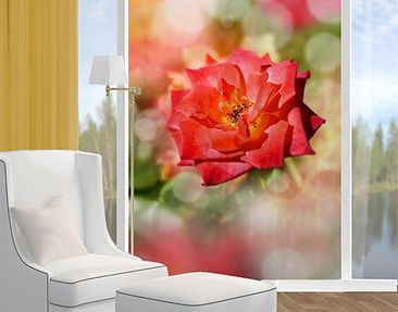 Product picture Window Mural no.YK19 Shining Rose
