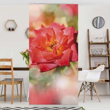 Produktfoto Raumteiler - No.YK19 Shining Rose 250x120cm