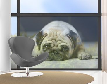 Product picture Window Mural Pug Loves You