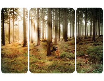 Product picture Wall Mural no.CA48 Morning Forest...