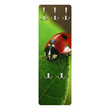 Produktfoto Garderobe - Lady Bird - Grün