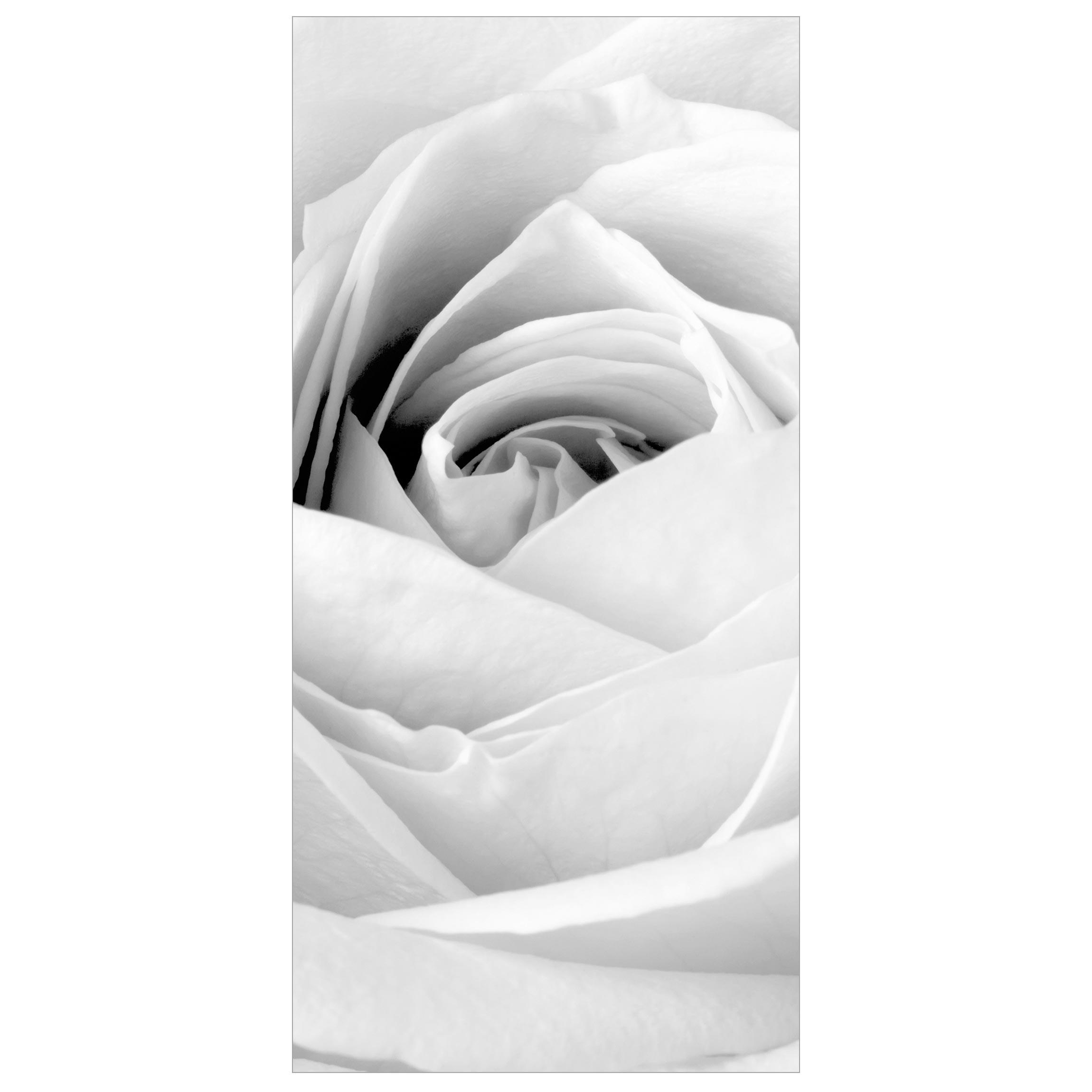 Bilderwelten Rosenbild Raumteiler White Rose Blumen 250x120cm inkl transparenter Halterung