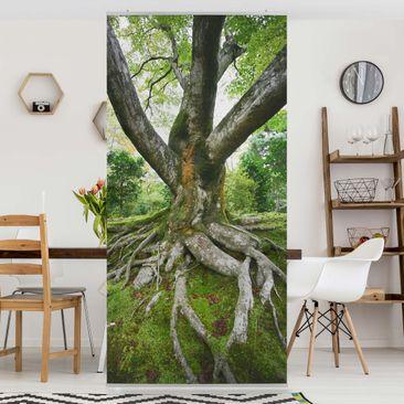 Produktfoto Raumteiler - Alter Baum 250x120cm