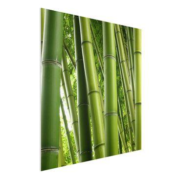 Produktfoto Forex Fine Art Print - Wandbild Bamboo Trees No.1 - Quadrat 1:1