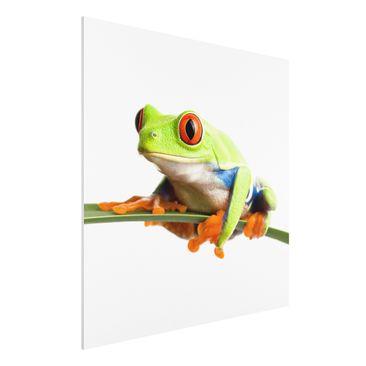 Produktfoto Forex Fine Art Print - Wandbild Weatherman - Quadrat 1:1