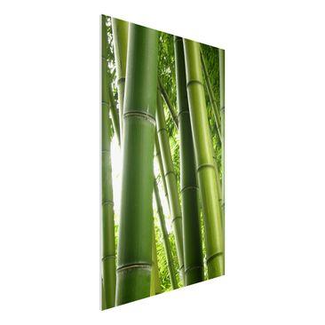 Immagine del prodotto Stampa su Forex - Bamboo Trees No.1 -...