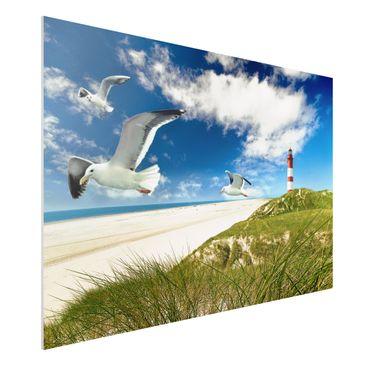 Produktfoto Forex Fine Art Print - Wandbild Dune Breeze - Quer 2:3