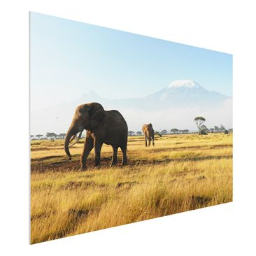 Product picture Forex Fine Art Print - Mural Elephants...