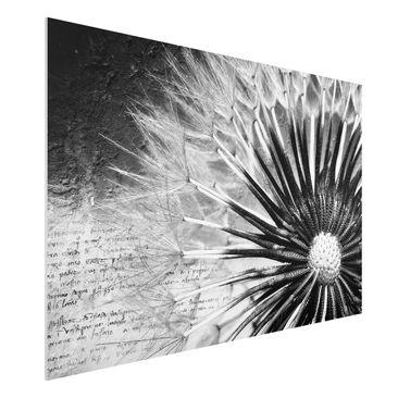 Produktfoto Forex Fine Art Print - Wandbild Pusteblume Schwarz & Weiß - Quer 2:3