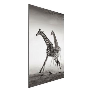 Produktfoto Aluminium Print - Wandbild Giraffenjagd - Hoch 3:2