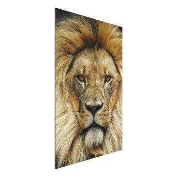 Produktfoto Aluminium Print - Wandbild Wisdom of Lion - Hoch 3:2