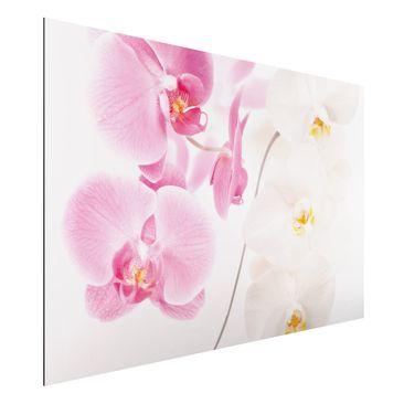 Produktfoto Orchideen Bild - Aluminium Print - Blumen Wandbild Delicate Orchids - Quer 2:3