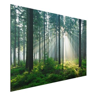 Produktfoto Aluminium Print - Wandbild Enlightened Forest - Quer 2:3